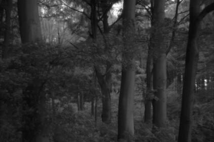 Grävingholz