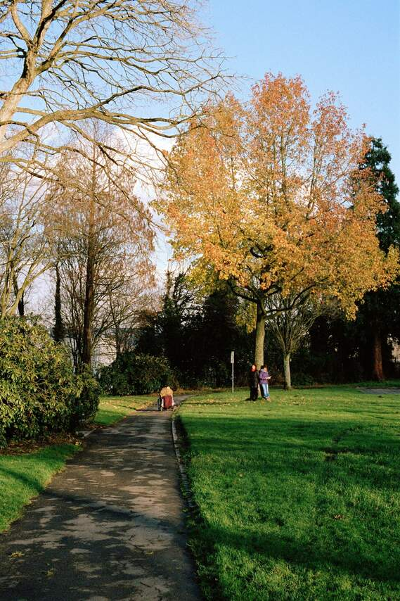 Ludwig-Kessing-Park, Hinsel