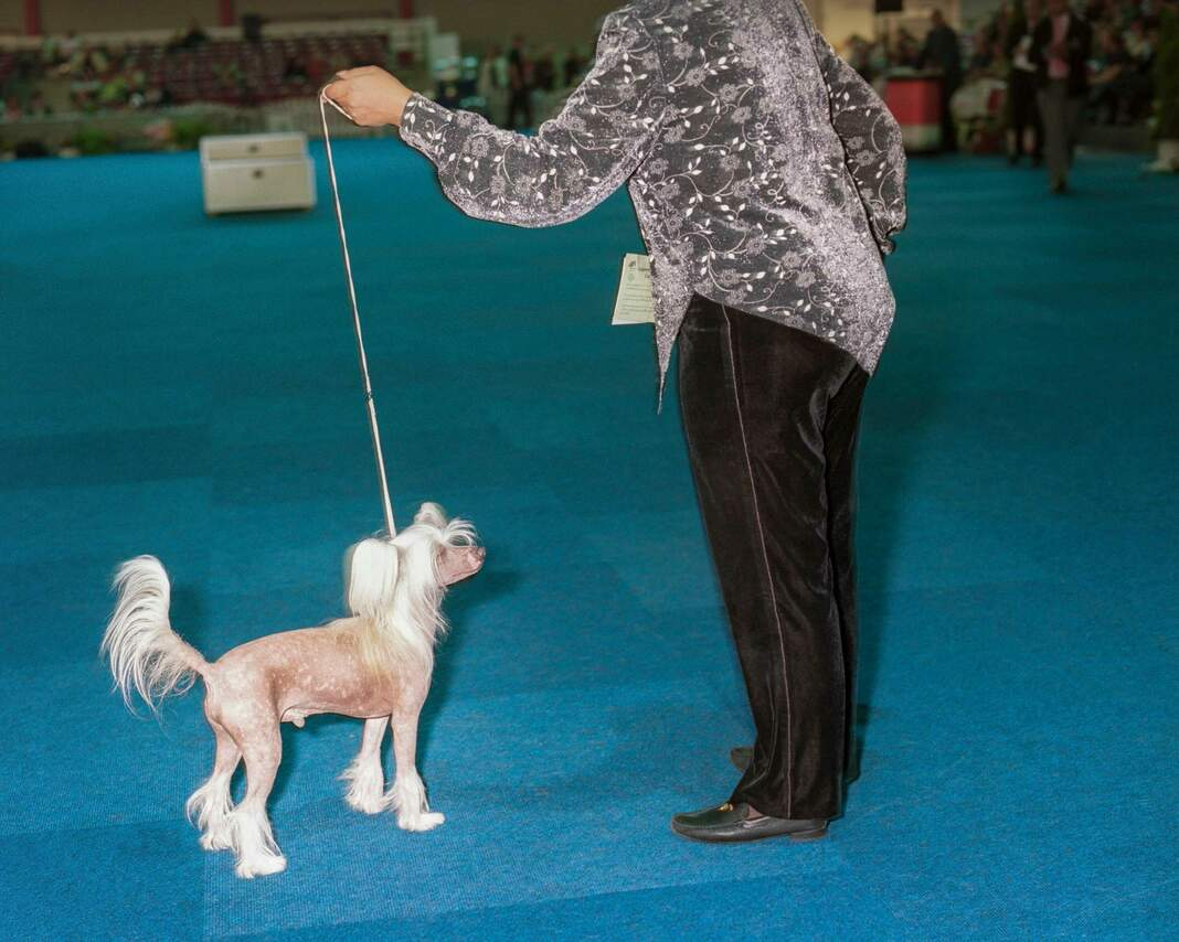 Messe: Hund+Pferd
