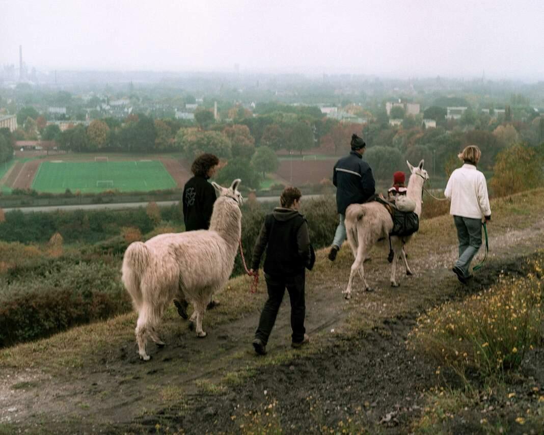 Lama-Wandern
